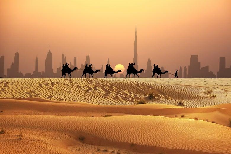 camels crossing the dubai desert