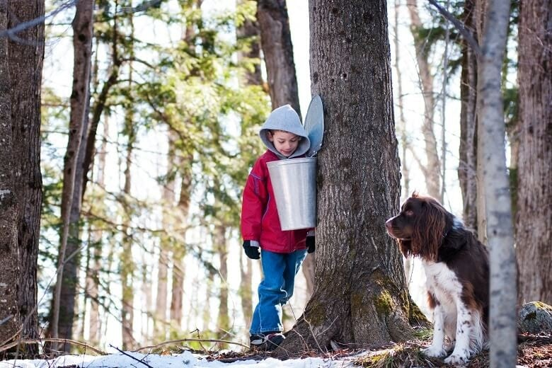 Boy and dog in maple syrup farm, Canada