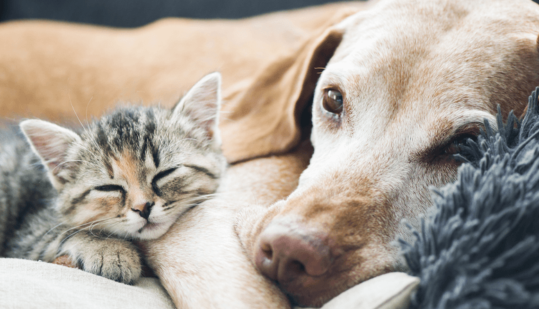 A Global Guide to Pet Relocation Costs 2019 | Save 70% | MoveHub