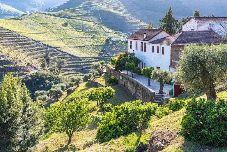 douro wine region in portugal