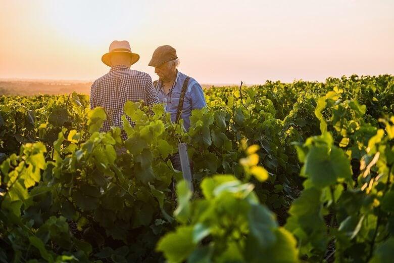 wine growers in french vineyard