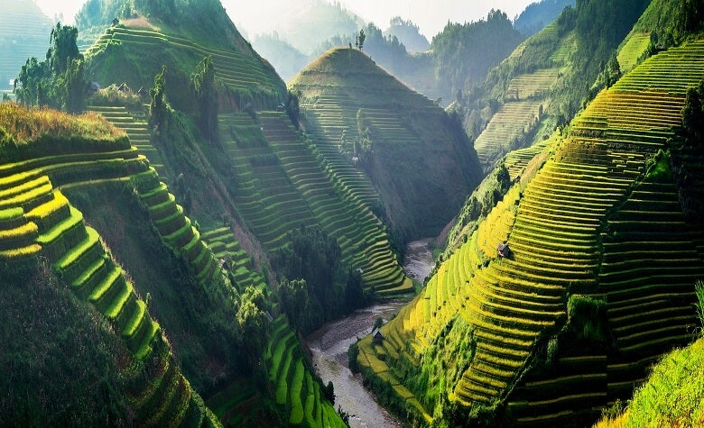 A view of rice fields in Vietnam