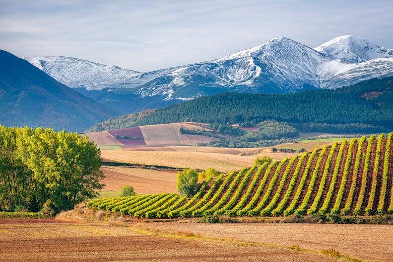 vineyard in rioja DOC