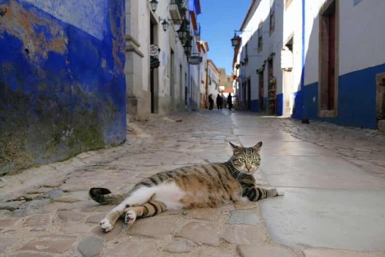 cat lying in the old town of Obidos in Portugal