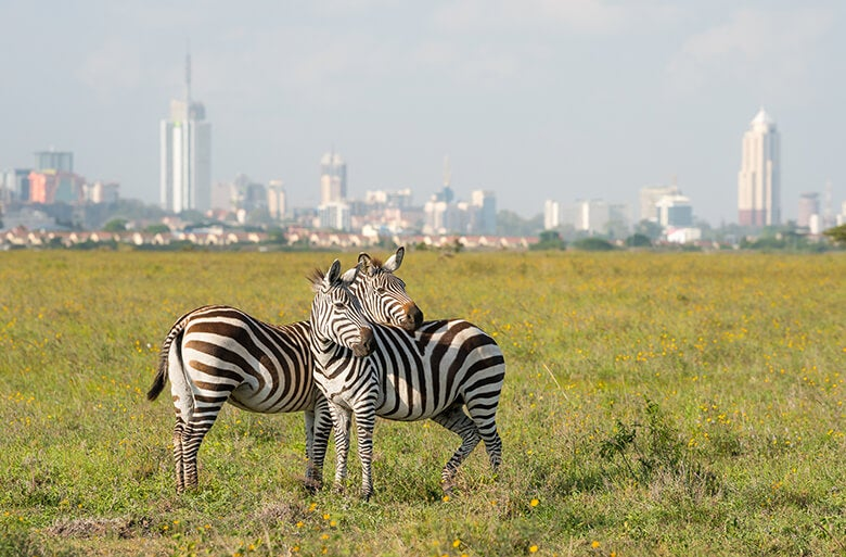 Two zebras with Nairobi in the background